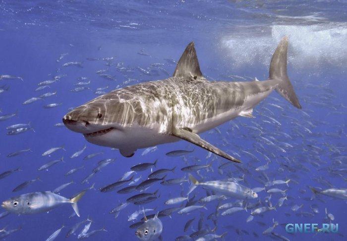 Охота на на акул-людоедов