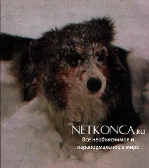 Замерзшая собачка