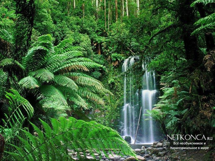 Тропический лес в капсуле времени